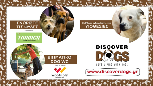 discover dogs 3
