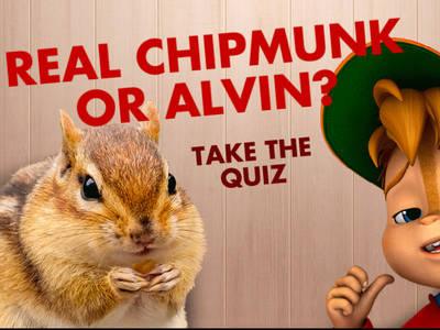 Ο ΑΛΒΙΝΝΝ!!! και η παρέα του - Real Chipmunk or Alvin?
